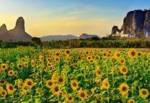 Ayutthaya to Lopburi