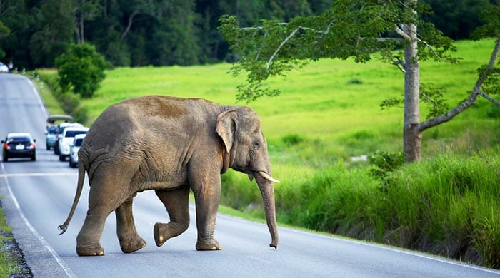 バンコクからカオヤイへの旅行選択肢