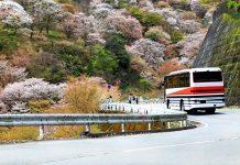Путешествие по Японии на автобусе